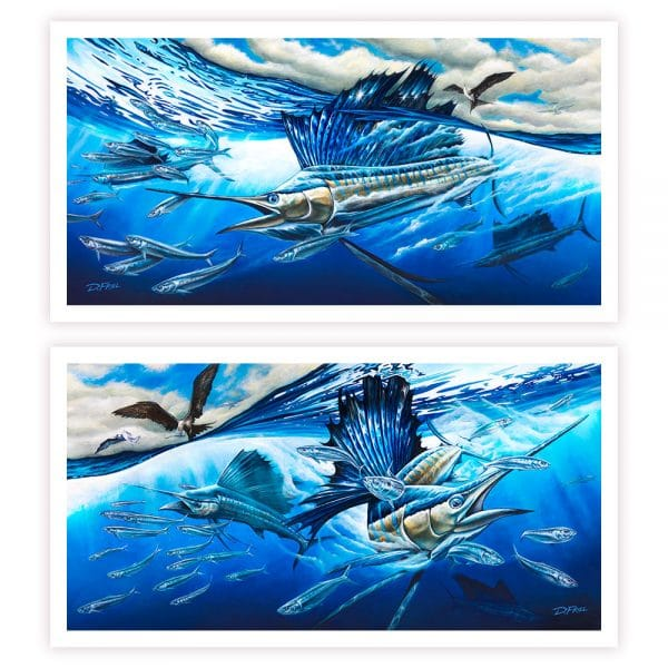 Atlantic Harmony Sailfish by D.Friel - Connected by Water