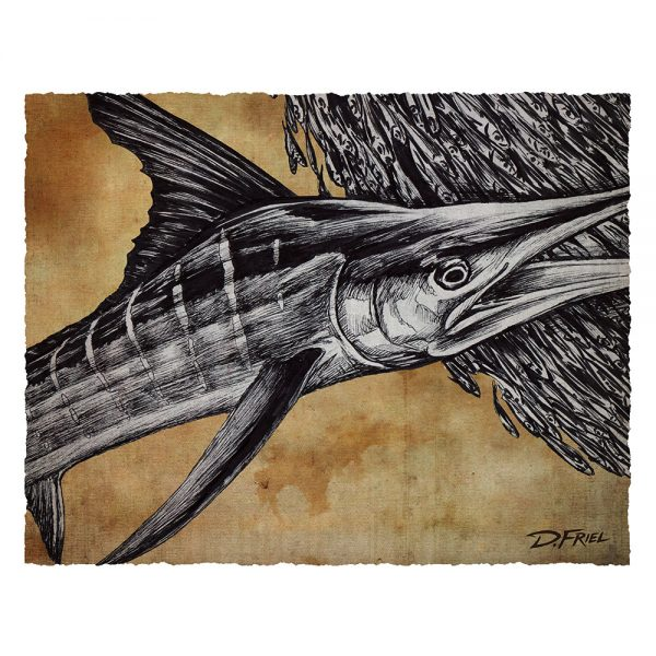7 Bills White Marlin Paper Study Prints by D. Friel - Connected by Water