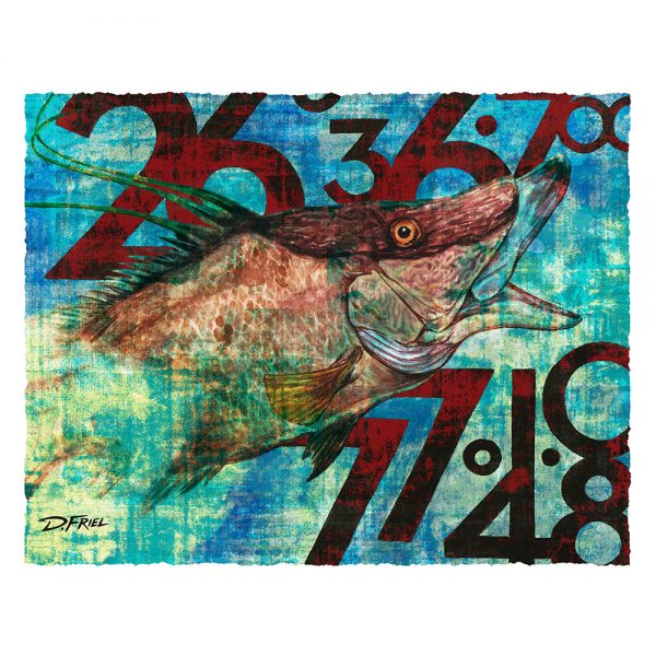 Coordinates Hogfish | Paper Study Print | by D.Friel - Connected by Water